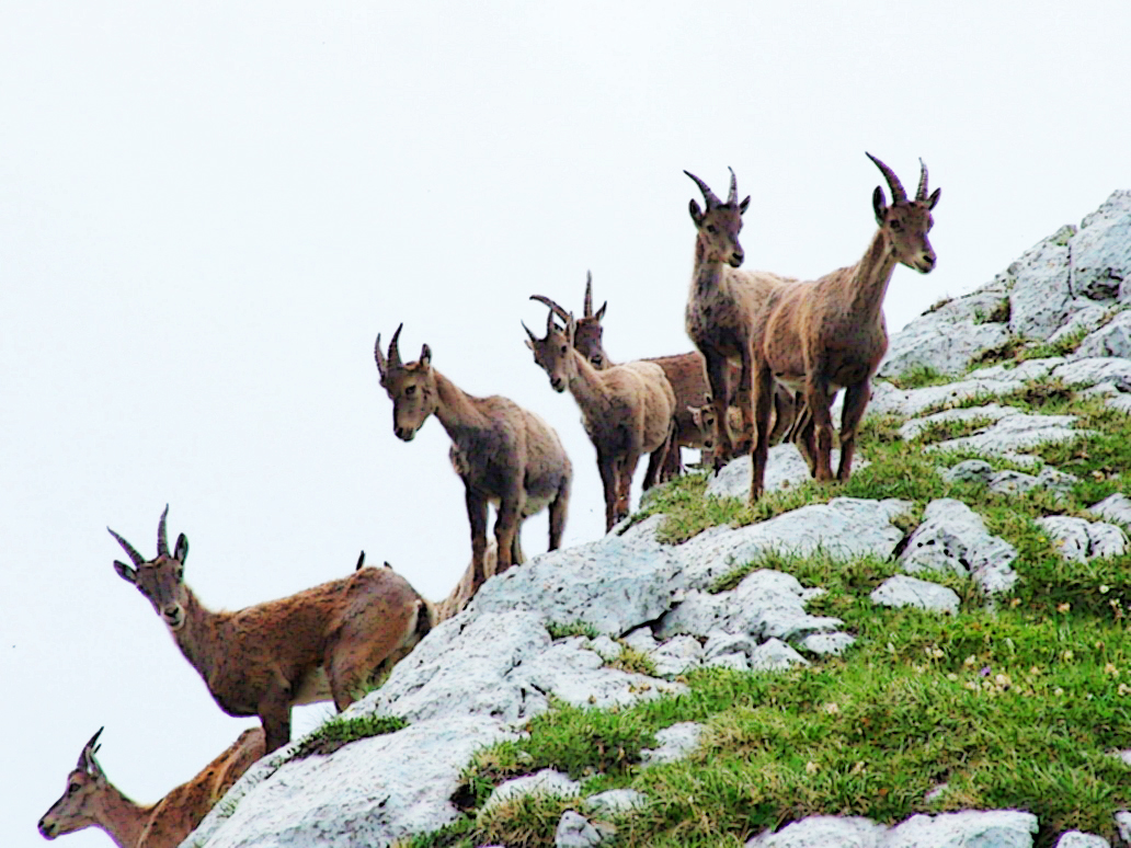 hillside_flock_2496862_by_stockproject1-d33yu8i
